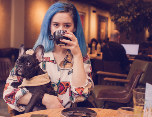 Descoperă 7 restaurante pet-friendly din București