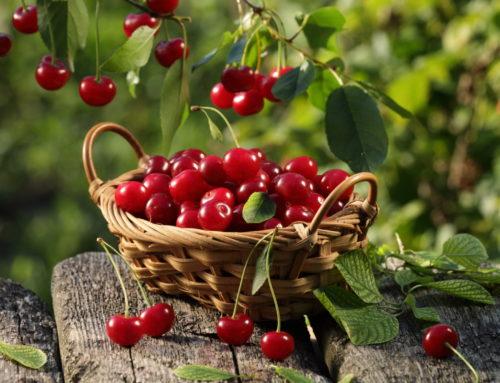 Totul despre cireșe: beneficii pentru sănătate și 5 rețete delicioase