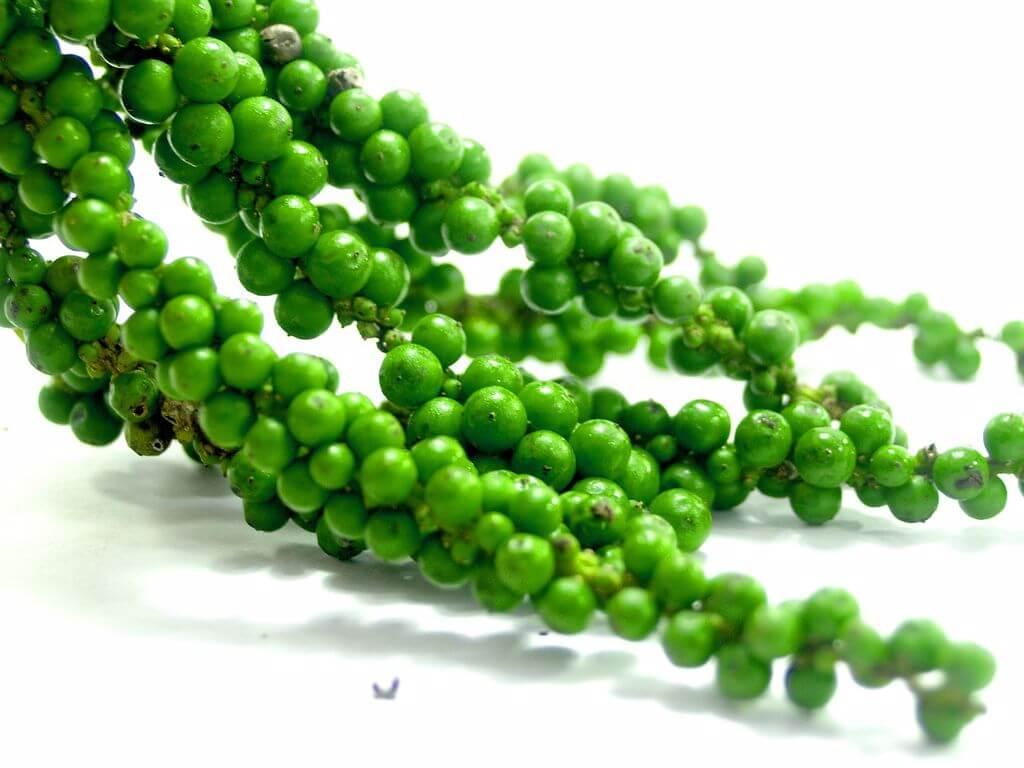 piper_verde