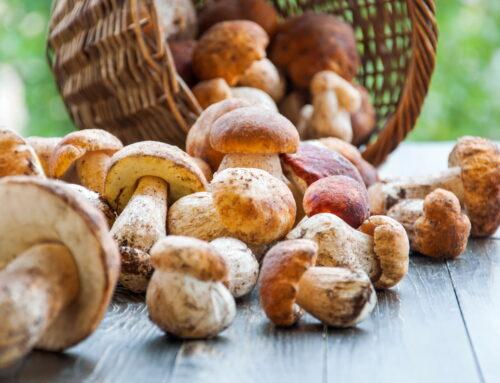 Ciuperci porcini: ce sunt și cum le gătești corect